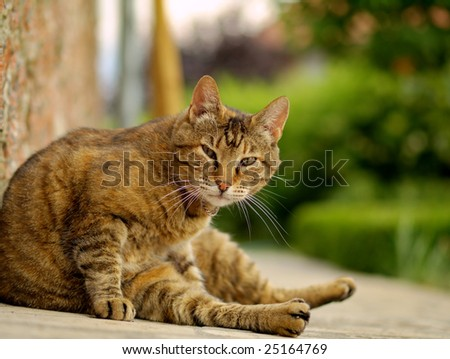 Brown cat on a green background