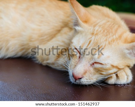 Brown cat sleeping on the outdoor sofa bed, closeup