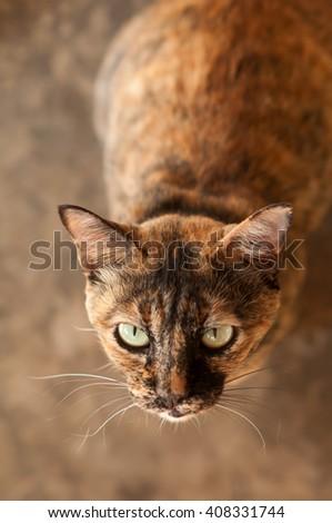 Brown cat stood staring at something. - stock photo
