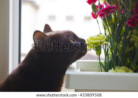 Brown cat with bouquet of the flower