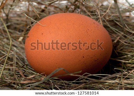 Brown chicken egg in nest. Close-up view. - stock photo