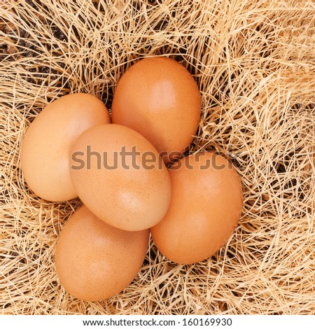 Brown chicken eggs on dry grass background - stock photo