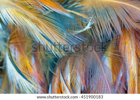 Brown chicken feather vintage color trends texture background