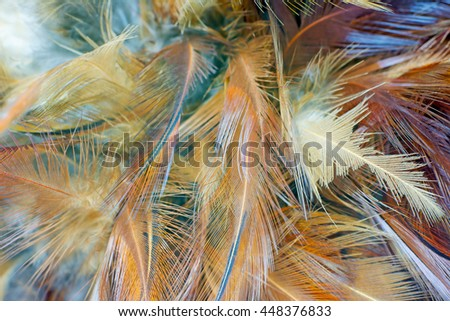 Brown chicken feather vintage color trends texture background,Interior soft luxury gray heaven angels,Modern image used for design living room,office and others