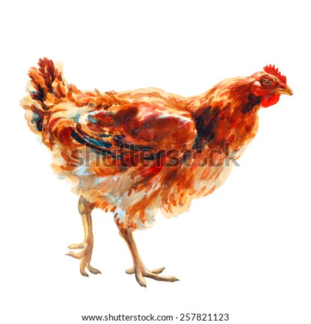 Brown chicken watercolor, clipping path included