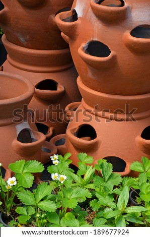 clay planter filled hens chicks cactus stock photo