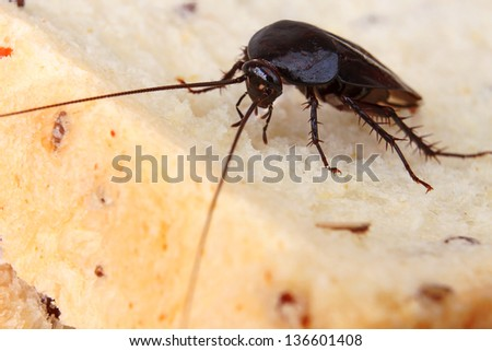 Brown Cockroach on a Piece of Bread - stock photo