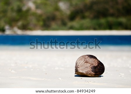Brown coconut on the beach - stock photo