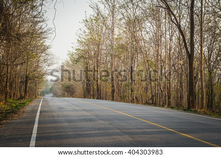 brown color of tree on the roadside