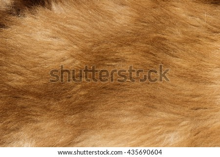 brown colored black bear cub fur background texture image - stock photo