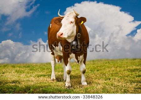 brown cow on a background sky with clouds - stock photo
