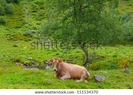 brown cow on a green pasture