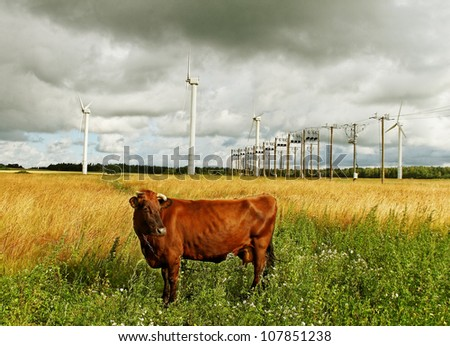 Brown cow on the field at wind generators. - stock photo