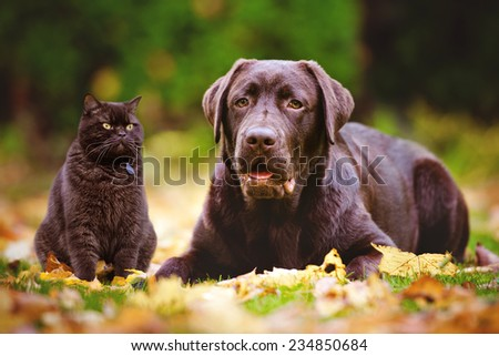 brown dog and cat outdoors together - stock photo
