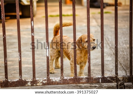 Brown dog in the fence.