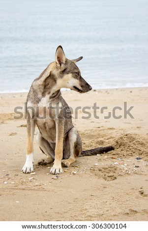 brown dog sit on beach