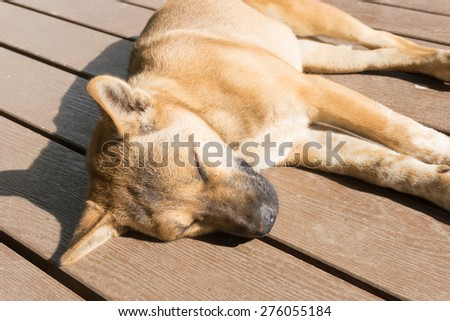 brown dog sleep on wooden floor - stock photo