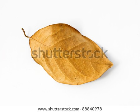 Brown dry leaf on a white background with shadow