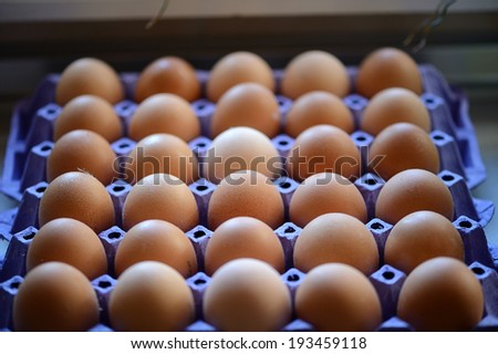 Brown egg - stock photo