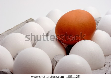 Brown egg with a carton of white eggs to show Standing out from the crowd - stock photo