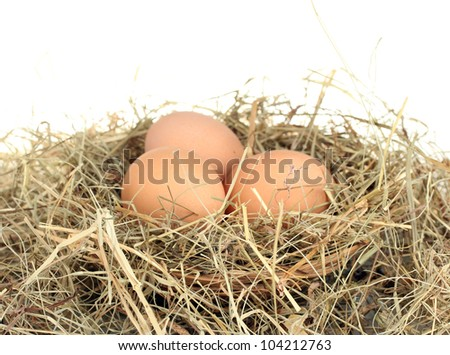 brown eggs in a nest of hay on white background close-up