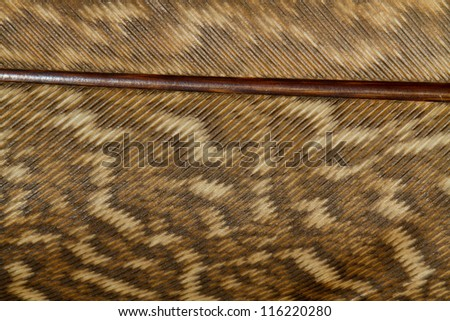 Brown Feather Close Up Detail - stock photo