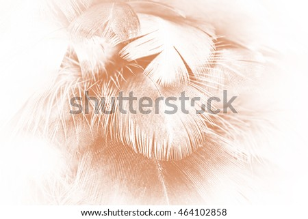 Brown feather texture abstract background
