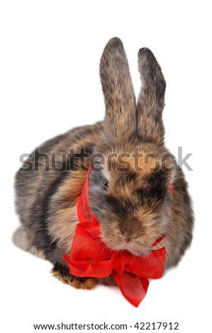 brown  fluffy rabbit with  red ribbon isolated