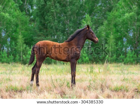 brown foal running in the field