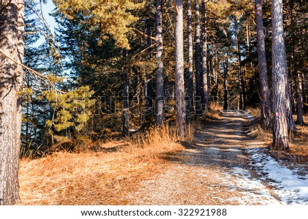 Brown footpath in a forest of green pines and firs on Dolomites snowy mountains in winter - stock photo