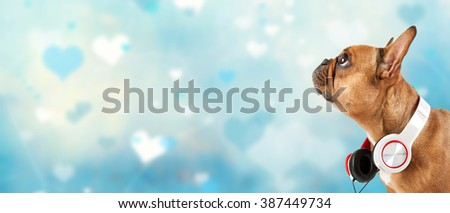 Brown French bulldog with headphone on blue heart background - stock photo