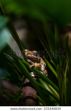 Brown frog on green stems. Zoo. Close-up portrait - stock photo
