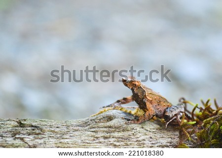 brown frog on moss