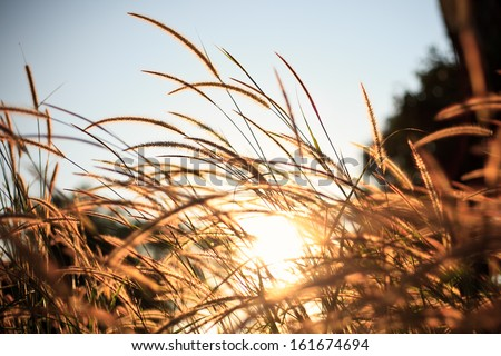 Brown grass and sun - stock photo