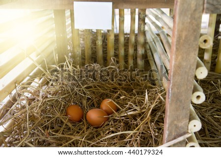 Brown Hen in organic henhouse farm close up of white board space for your name and blur background - stock photo