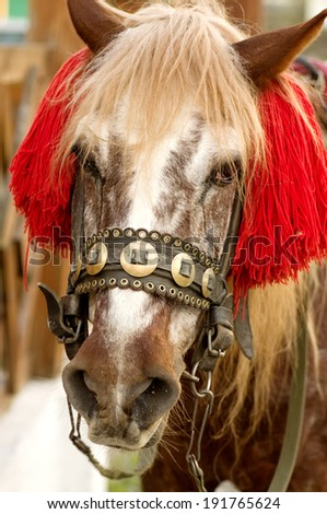 Brown Horse - stock photo