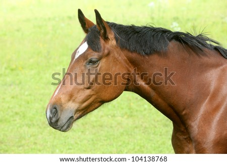 Brown horse against grass background - stock photo
