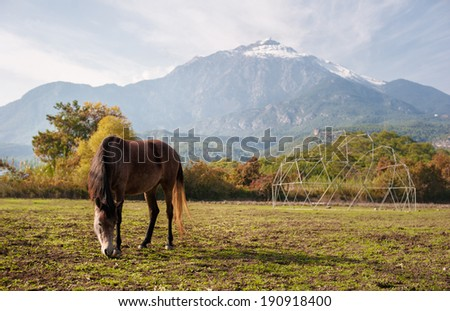 Brown horse browsing near high beautiful mountains