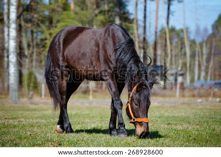 brown horse eating grass on a field - stock photo