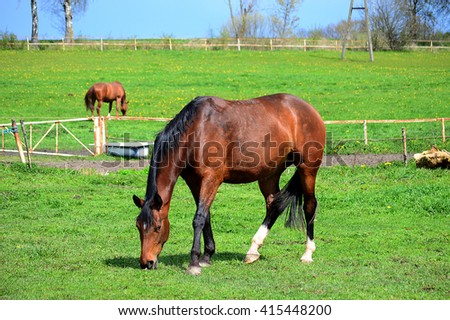 Brown horse eating grass on a field on sunny day