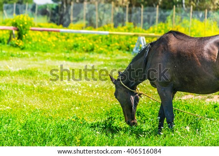 brown horse grazing in a green field