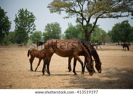 Rural Area Stock Images Royalty Free Images Amp Vectors