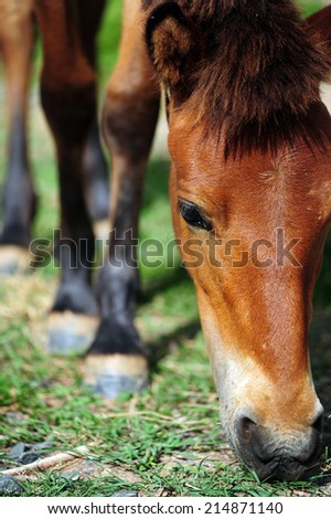 Brown horse grazing on meadow at animal farm - stock photo