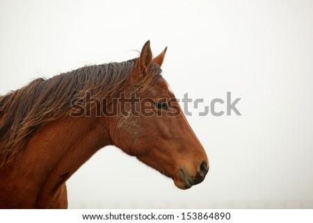 brown horse head-shot in profile - stock photo