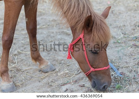 brown horse. horse in the paddock and bent over eating dry grass - stock photo