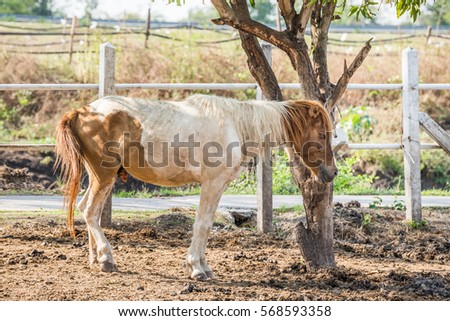 Brown horse in a farm eating grass