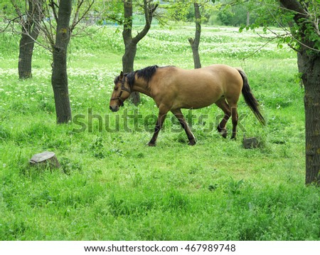Brown horse in a green forest in a summer day