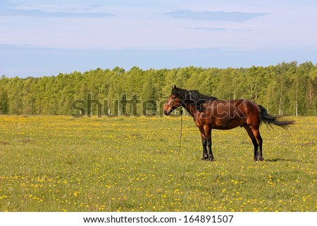 Brown horse in a pasture
