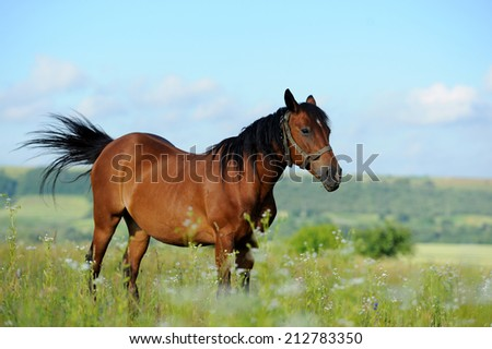 Brown horse in spring meadow on sky background - stock photo