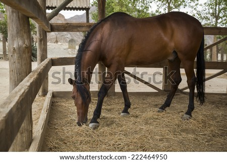 Brown horse in the stable - stock photo
